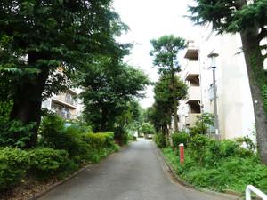Kitaaoyamaa